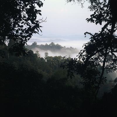 forêt nina